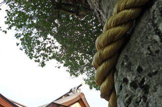 神木と社殿