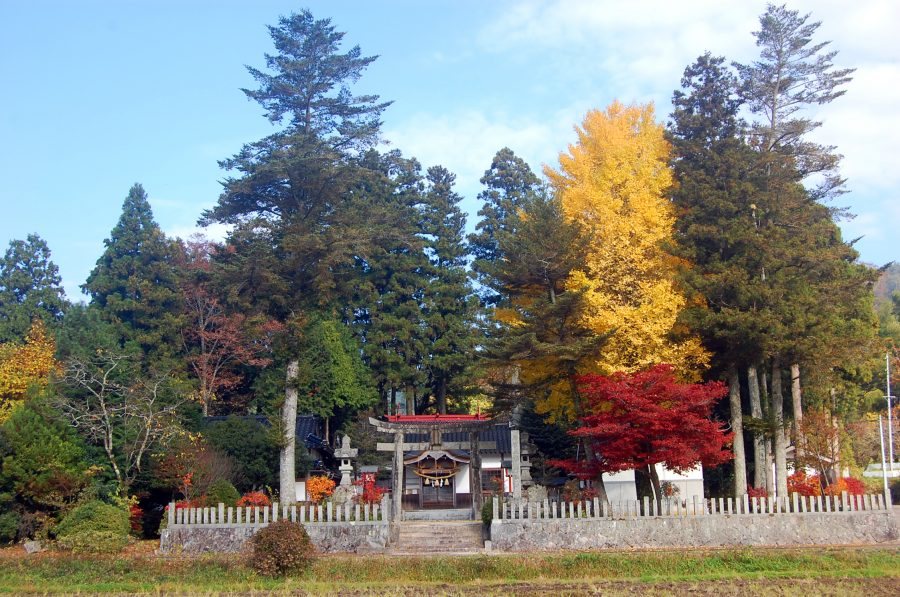 紅葉する神社の杜