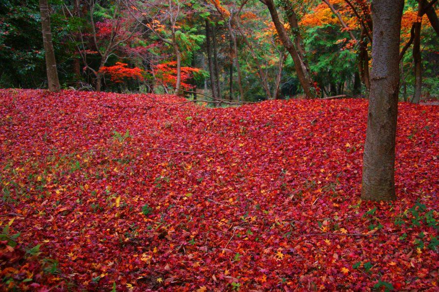 落葉の境内