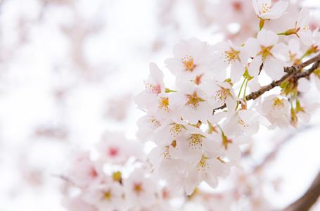 写真:春祭