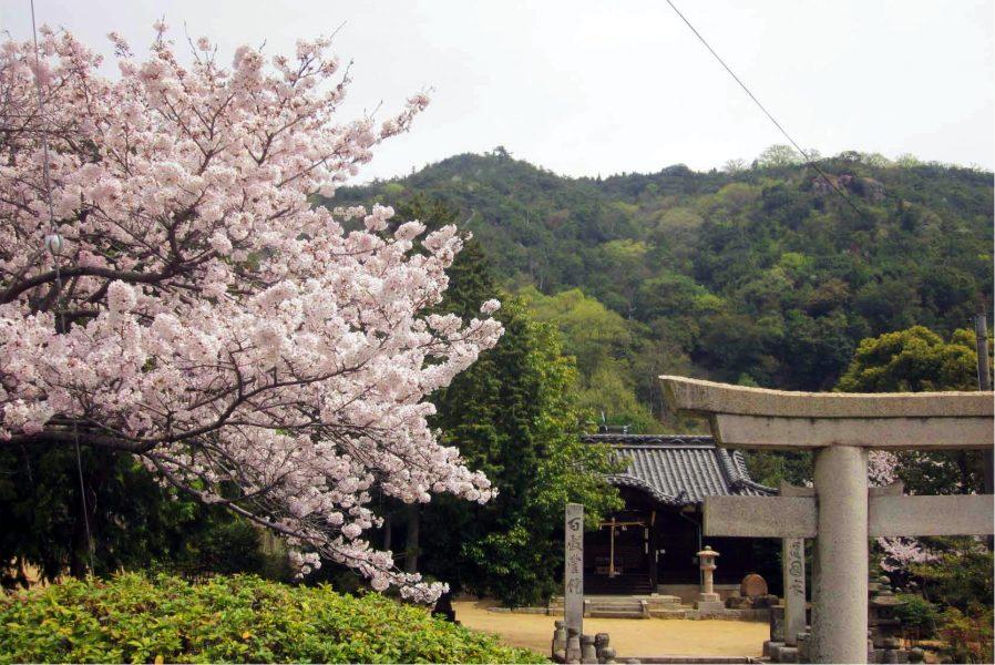 七神社の桜