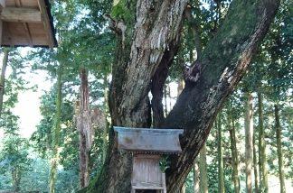 大洗神社の大樹と境内神社