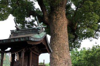 境内神社と楠の大木